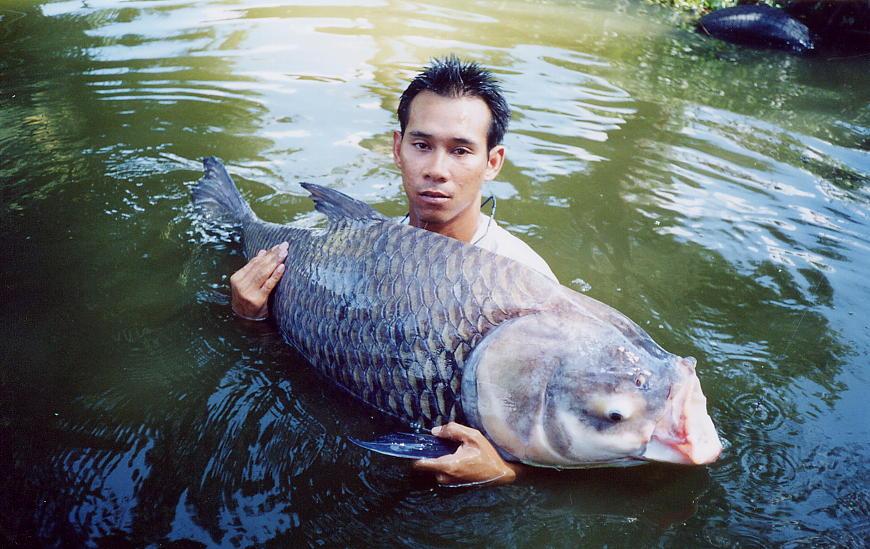 рыбалка в тайланде как рыба
